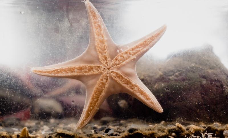 Tofino, Beach, sunset, waves, photographer, family, starfish, aquarium, ucluelet